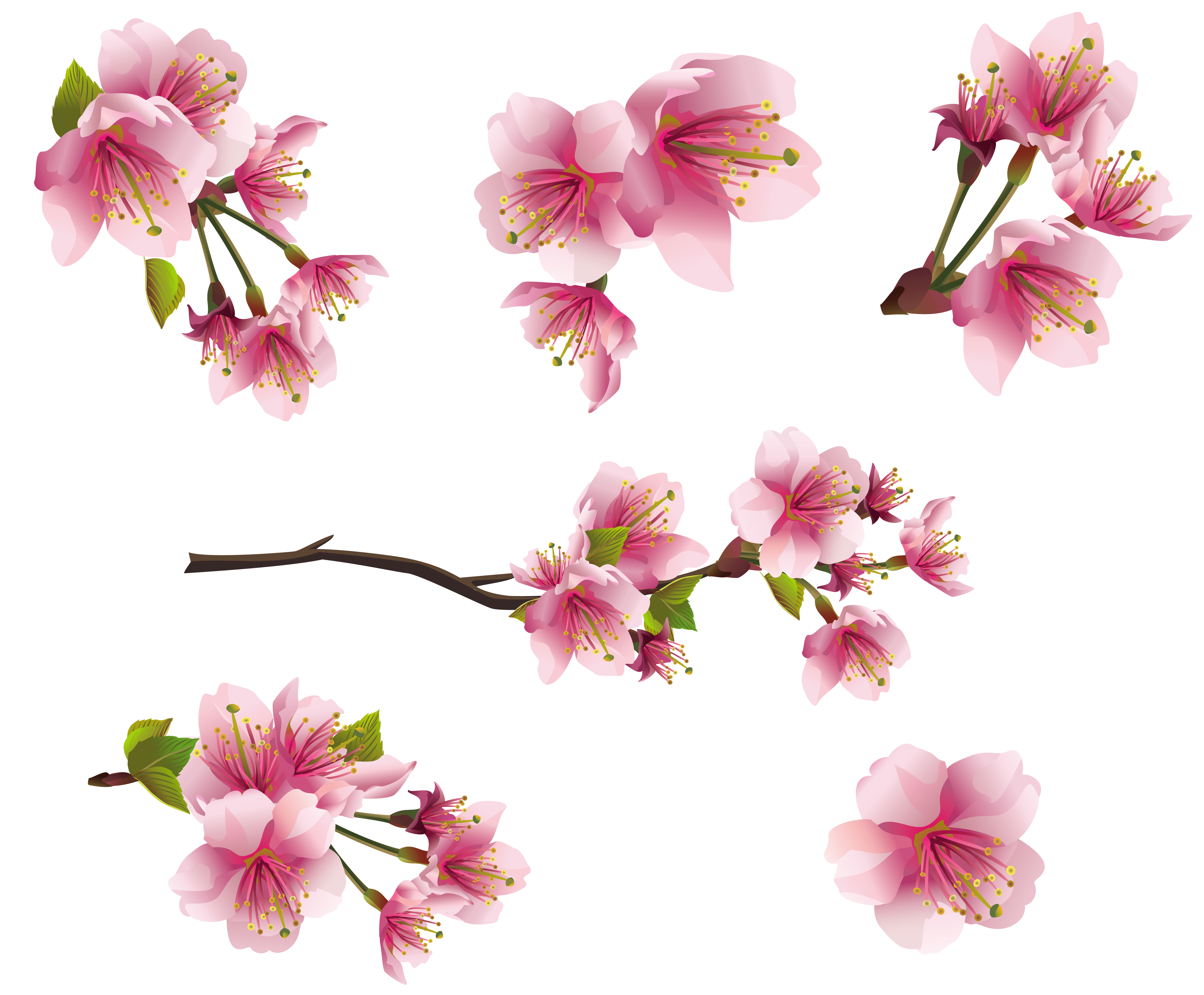 Spring .png. Pink branch elements png