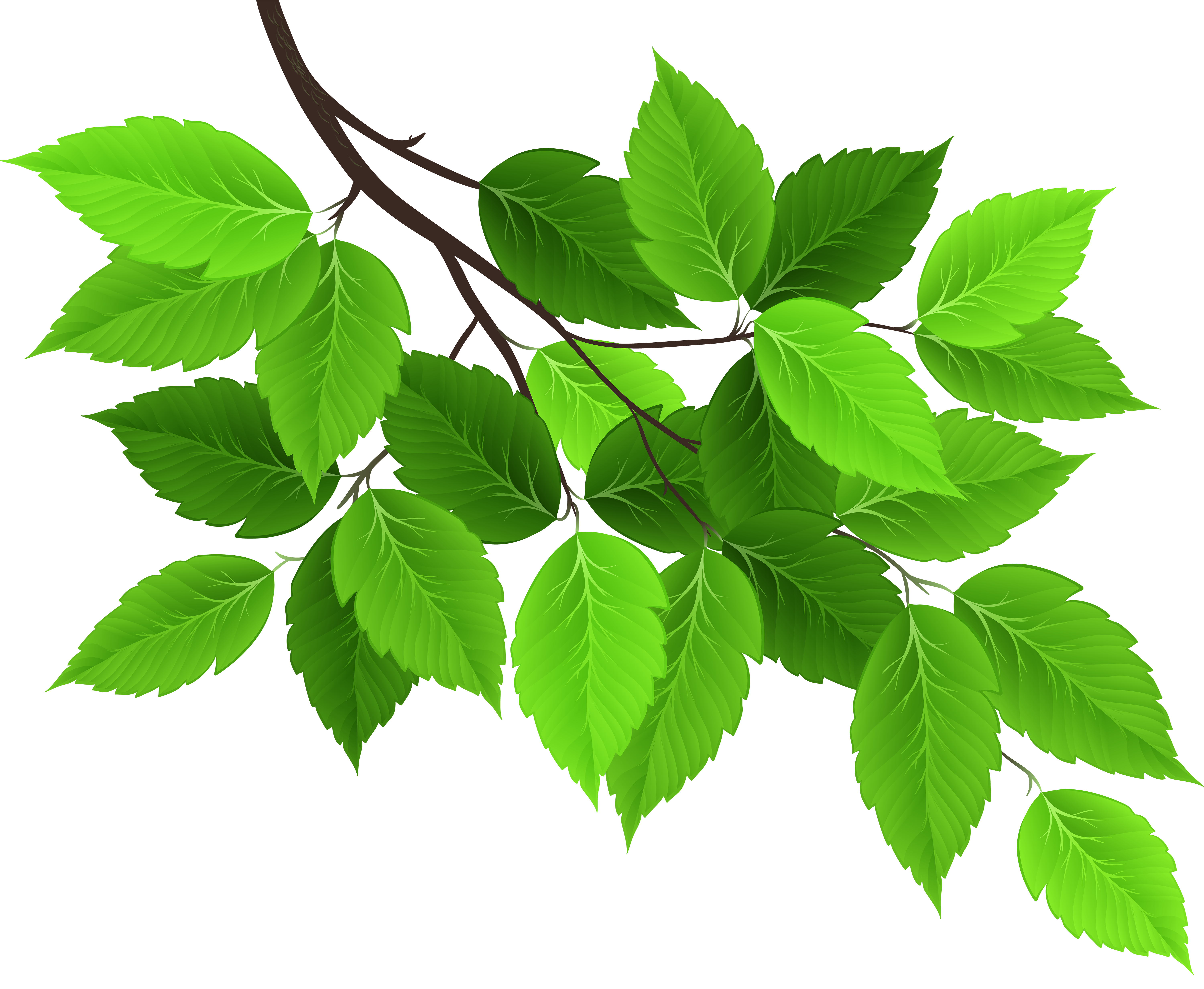 Branch with leaves png. Green clip art image