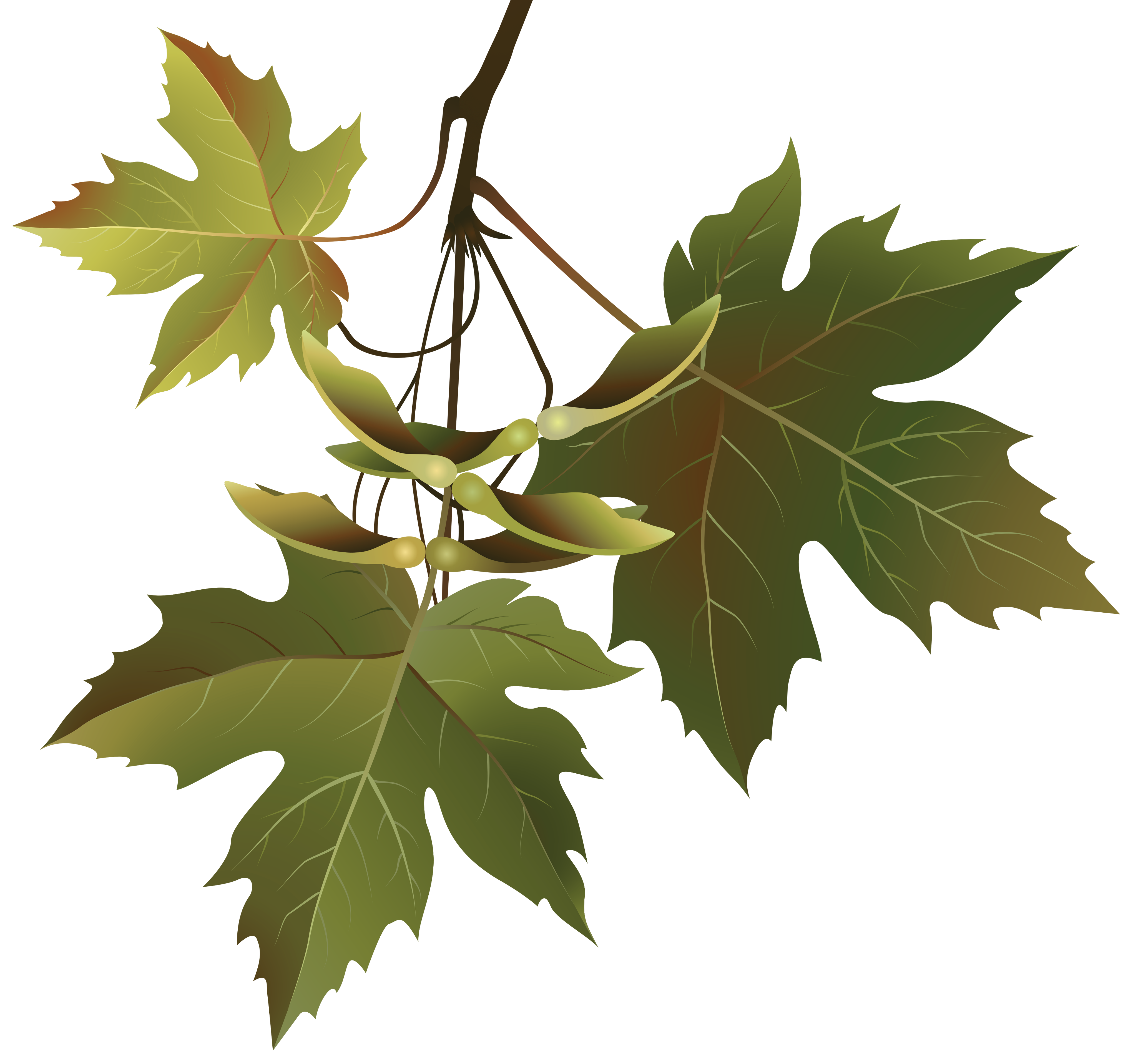 Branch with leaves png. Autumn clipart image gallery