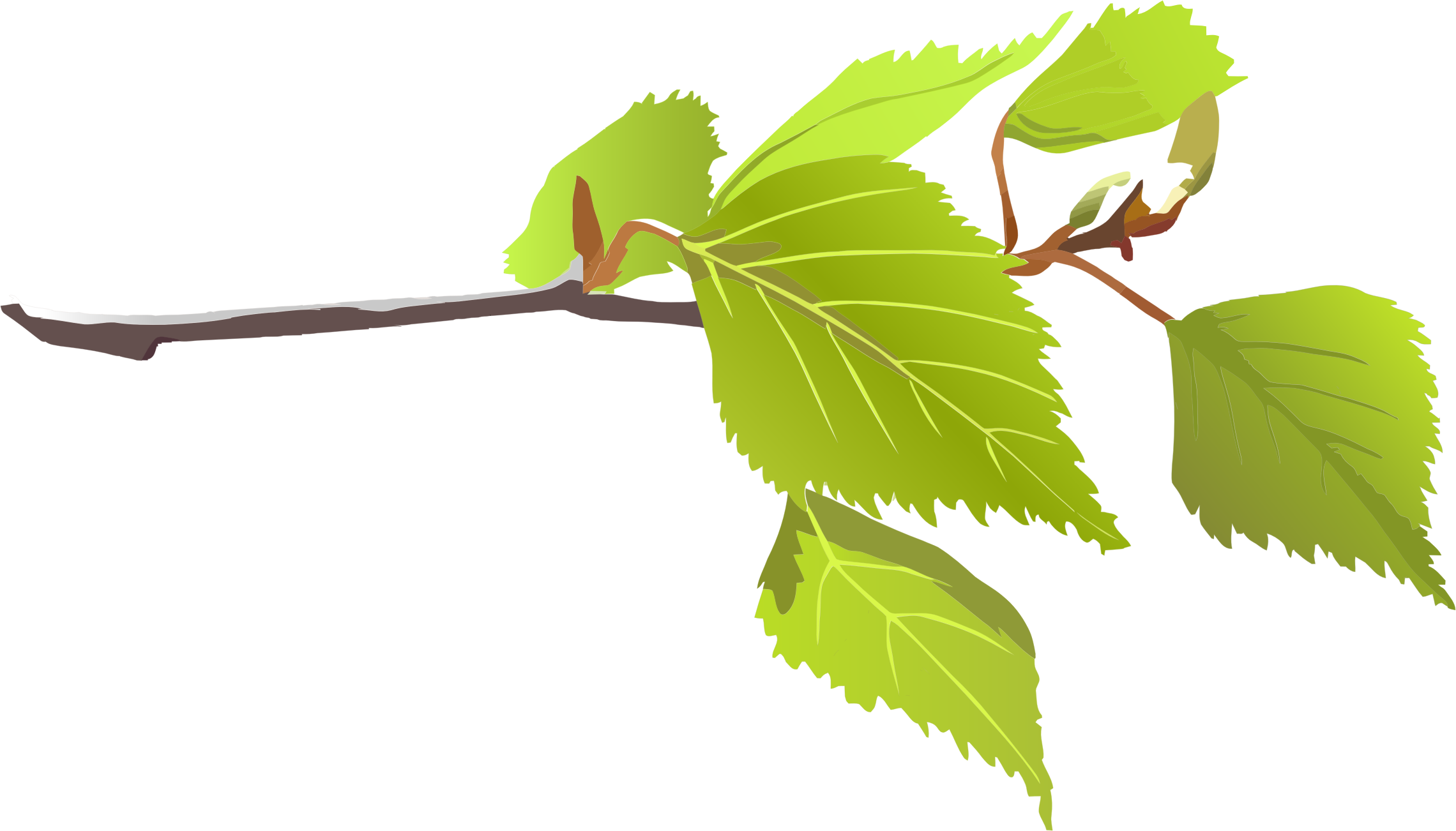 Branch with leaves png. And green icons free