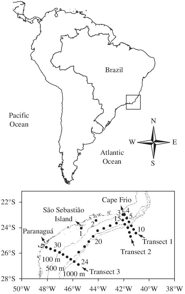 Brazil drawing sao. Area of study showing