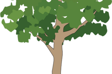 Brazil drawing tropical rainforest. Tree k pictures full
