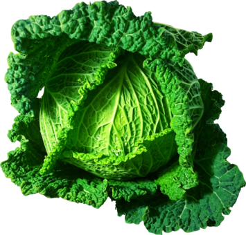 Broccoli clipart cabbage chinese. Vegetarian cuisine red free