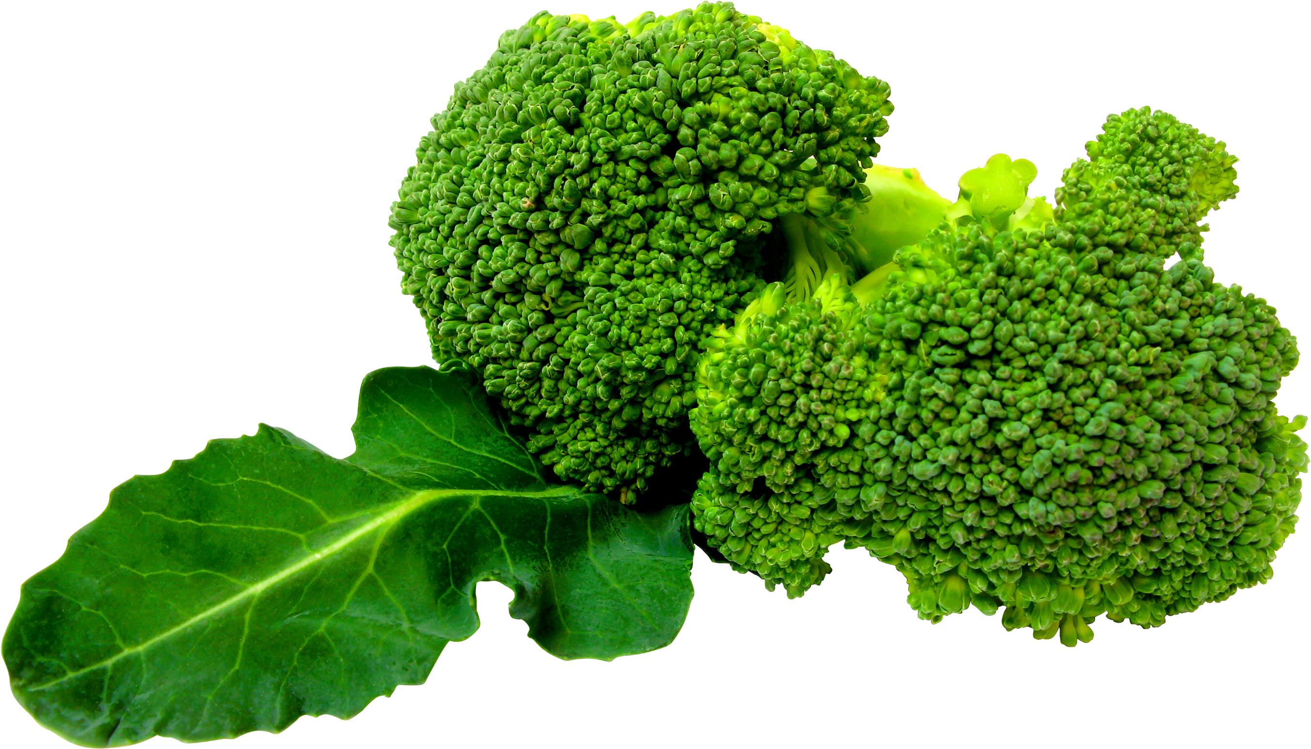 vegetable plant png