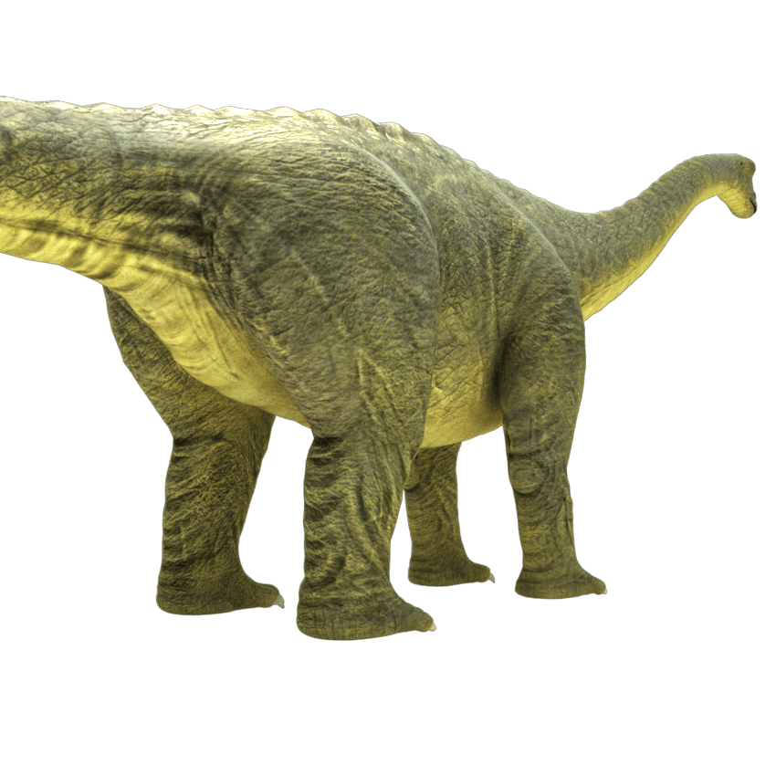 Brontosaurus drawing jurassic period. Rig animation ready d