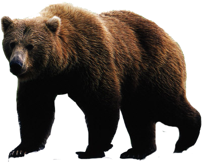 Brown bear png. Transparent images pluspng