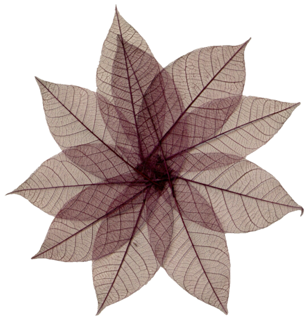 Brown flower png. Dried pressed s by