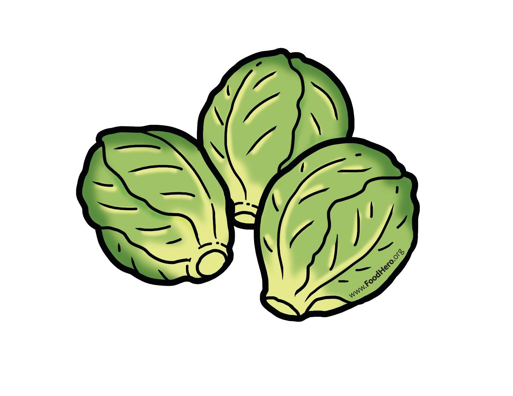 Brussel Sprouts. Brussels illustration brusselssprouts