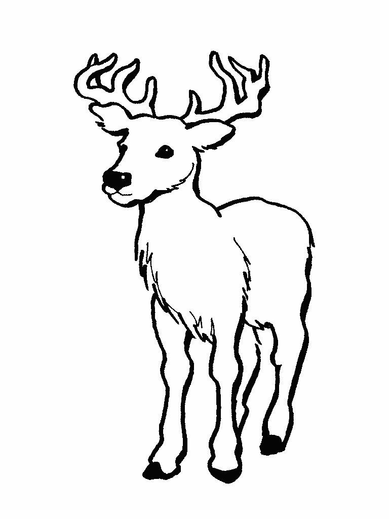 buck coloring page transparent clipart free download ya White-Tailed Deer Skeleton white tailed deer drawing 768 x 1024 14