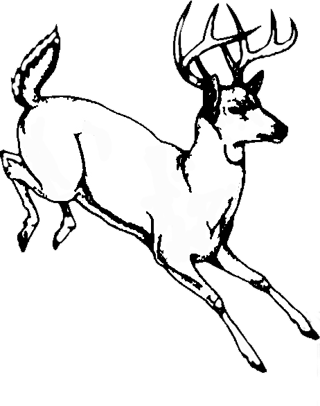 Buck clipart sketch. Line drawing at getdrawings