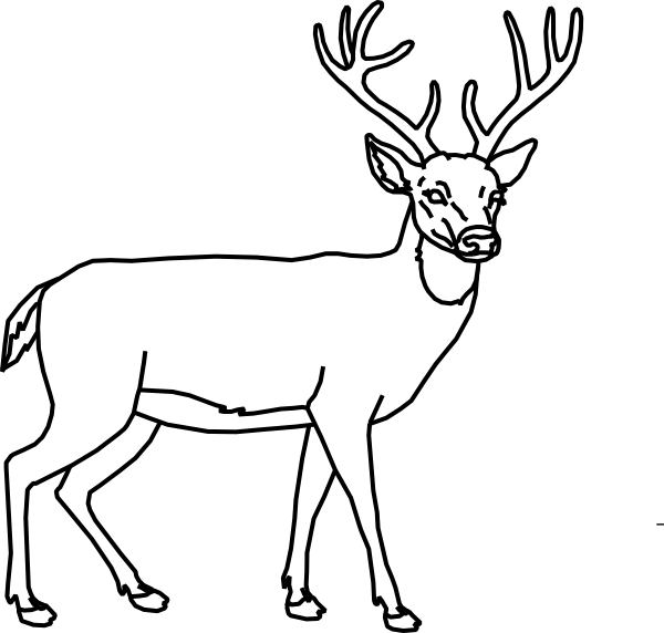 Buck line at getdrawings. Dear drawing pen clip library download