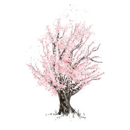 Largest collection of free. Bud drawing cherry blossom clip art free download