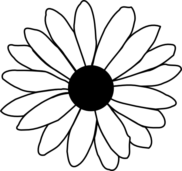 Bud drawing daisy. Black and white at