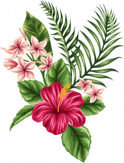 Bud drawing hibiscus. Vintage flower pictures and