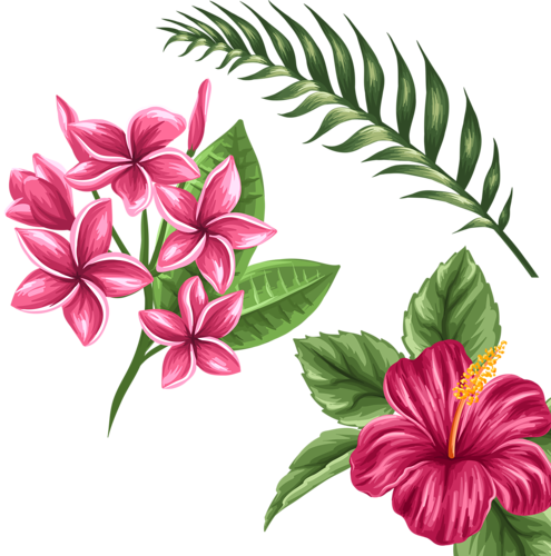 Bud drawing hibiscus. Pin by kim cerise