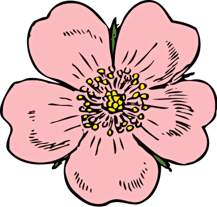 Bud drawing wild rose. Collection of free blossomed