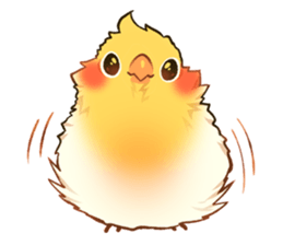 Budgie drawing cute. Png parrot care