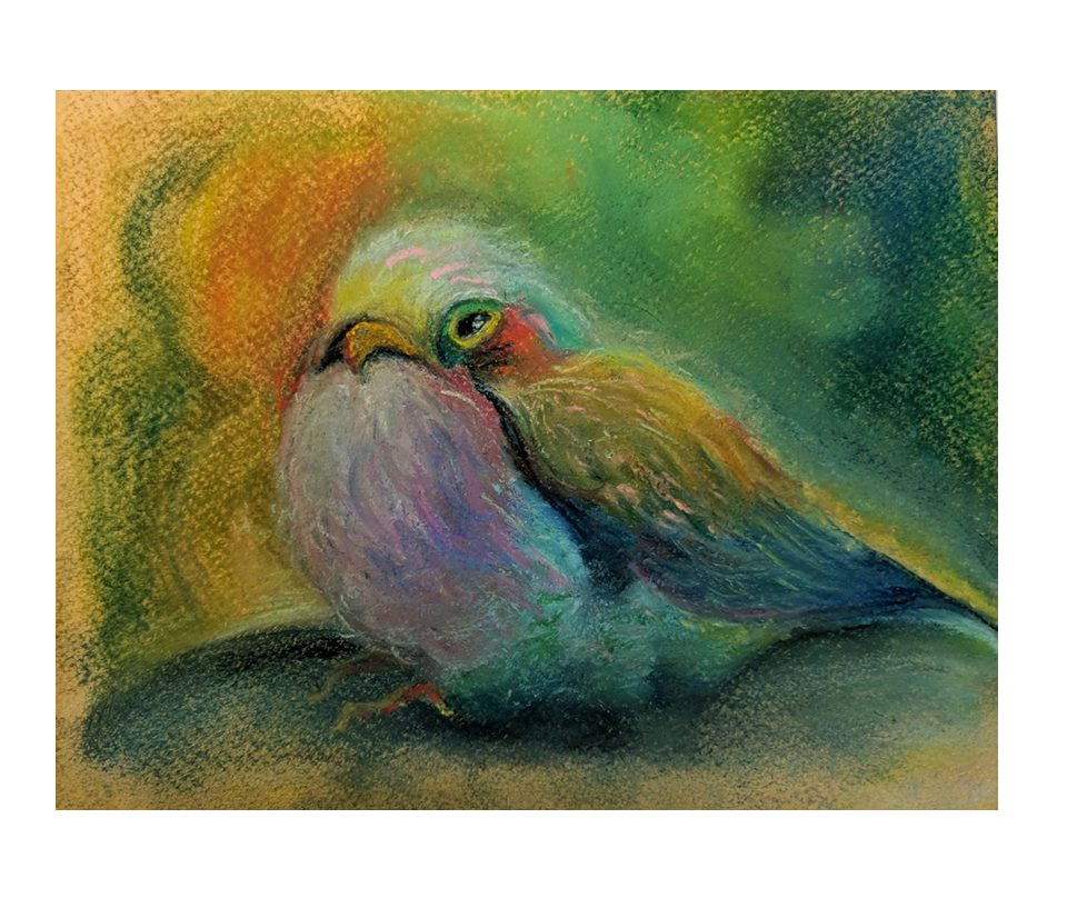 Budgie drawing painting. X signed limited