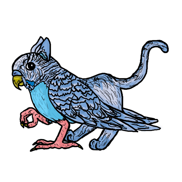 Budgie drawing easy. How to draw a