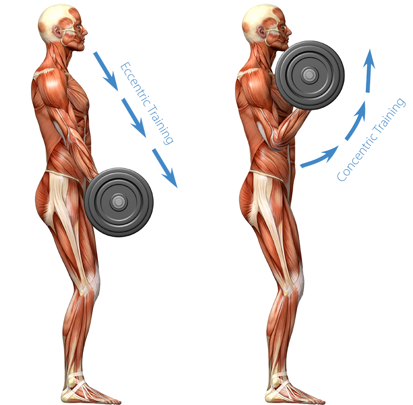 Buff legs png. Muscle building a full