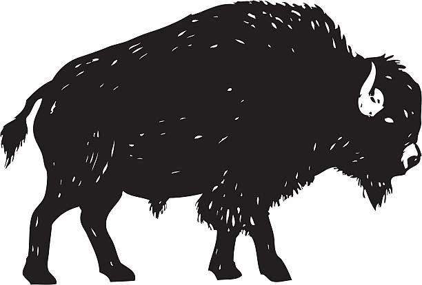 Buffalo clipart. Image result for wild