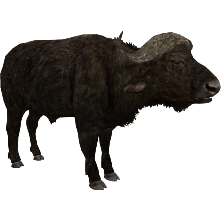 Buffalo transparent zoo tycoon. African aurora designs zt