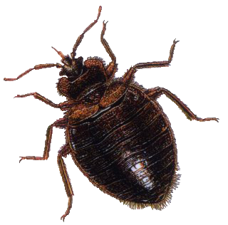 Bug transparent. Png images pluspng image