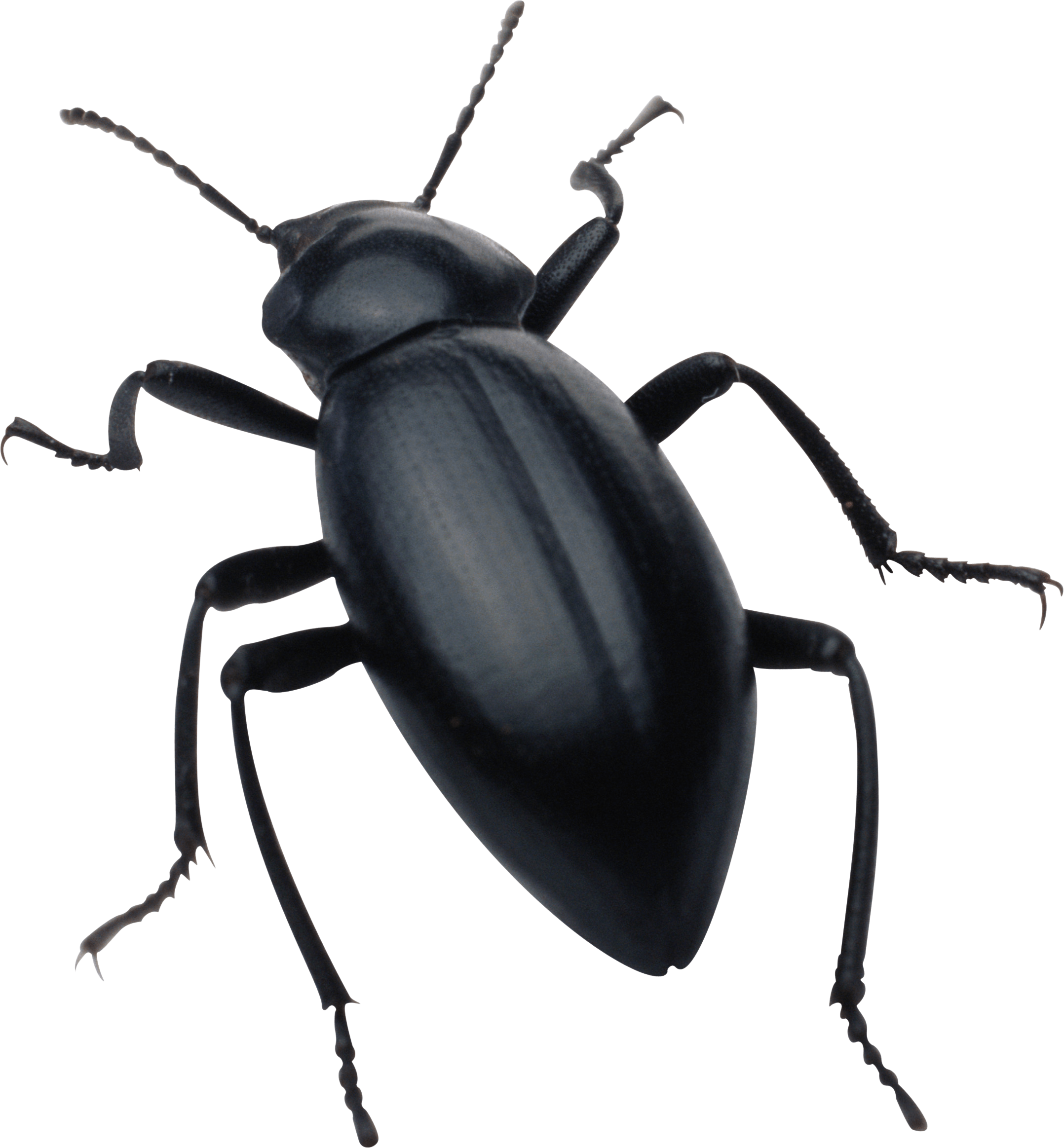 Bug transparent. Black png stickpng