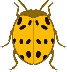 Bugs clipart yellow bug. Free beetle cliparts download