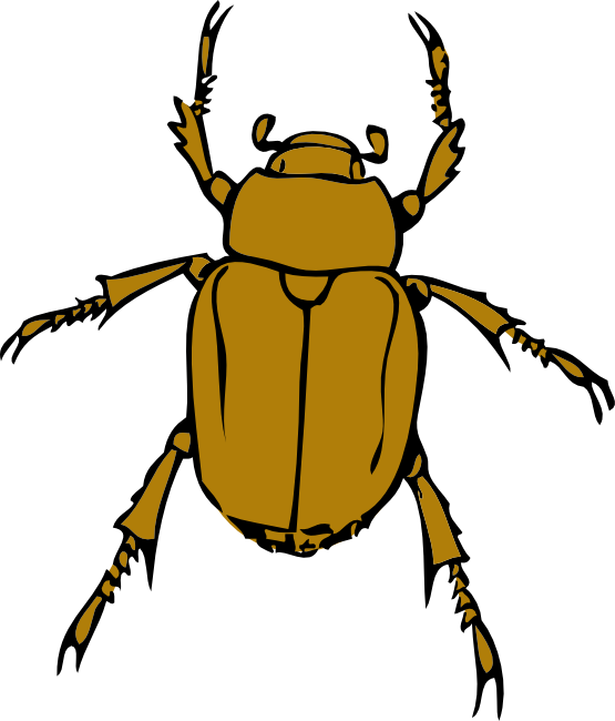 Bugs clipart yellow bug. Beetle clip art png