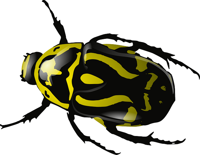 Bugs clipart yellow bug. Png images free pictures