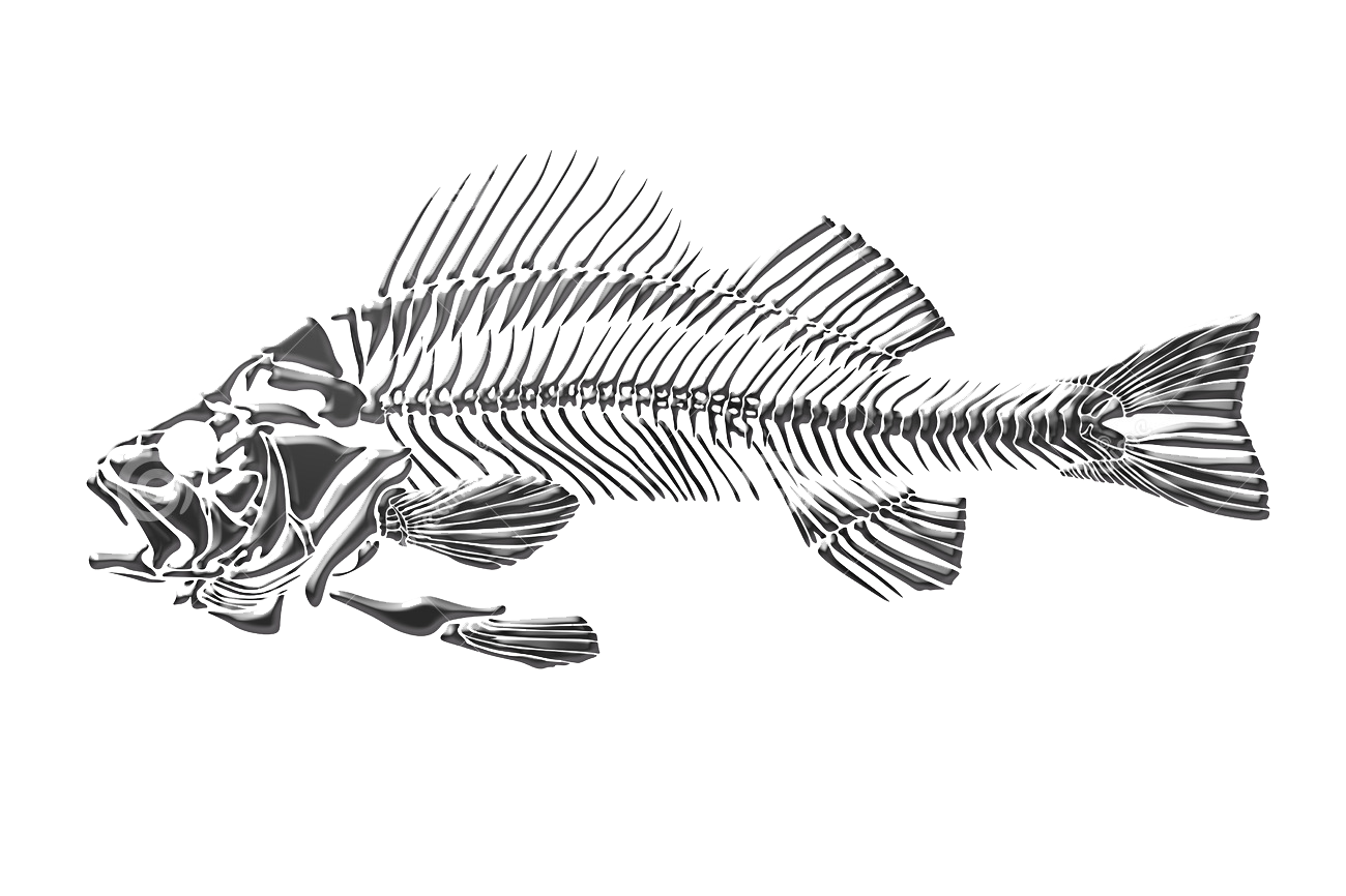 Russia drawing skeleton. Fish dead transprent png