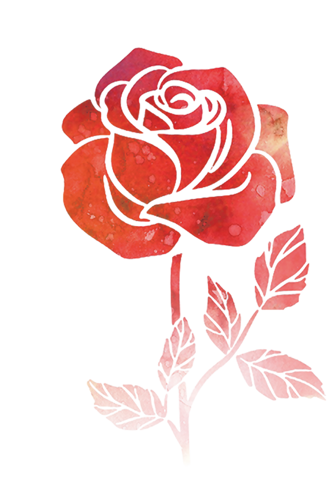 Bulb drawing rose. Flower watercolor painting flowers