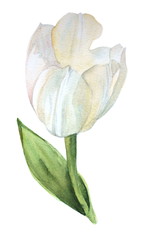 Drawing orchid watercolor. Tulips painting in