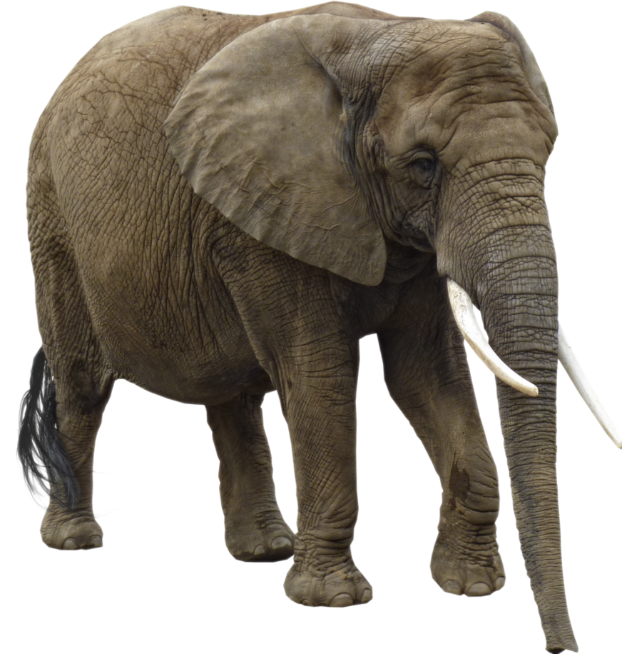 Bull elephant png. Transparent pictures free icons