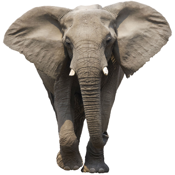 Tribal elephant png. Elephants images free download