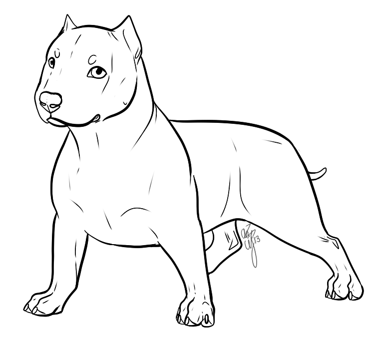 Bully drawing. American puppy lineart by