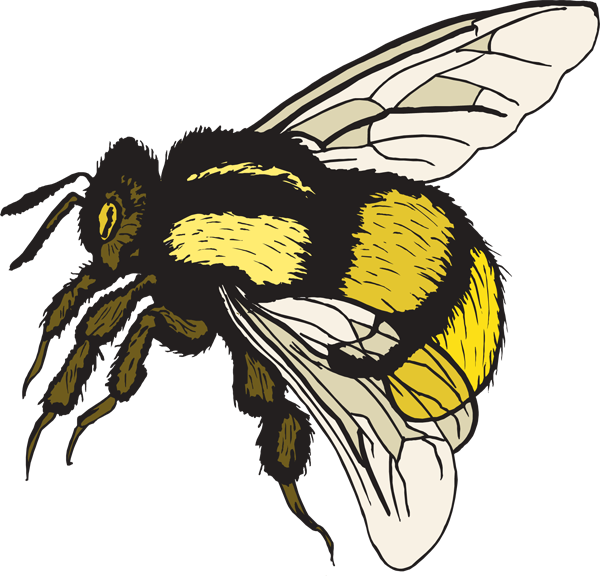 Bumblebee clipart. Free bumble bee images