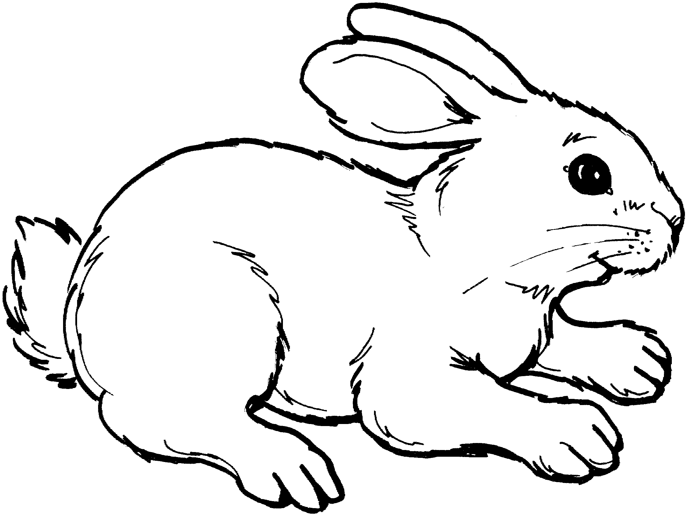 Bunny clipart black and white. Fresh design digital collection