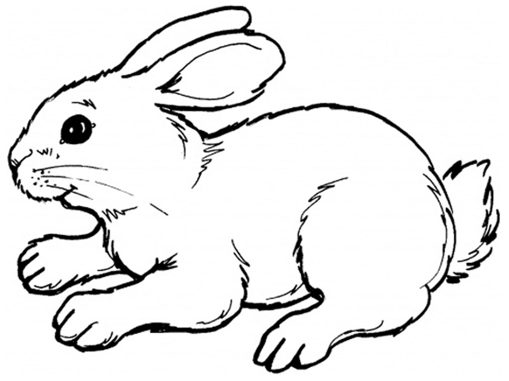 Bunny clipart black and white. Rabbit drawing