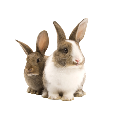 Bunny png. Images transparent free download