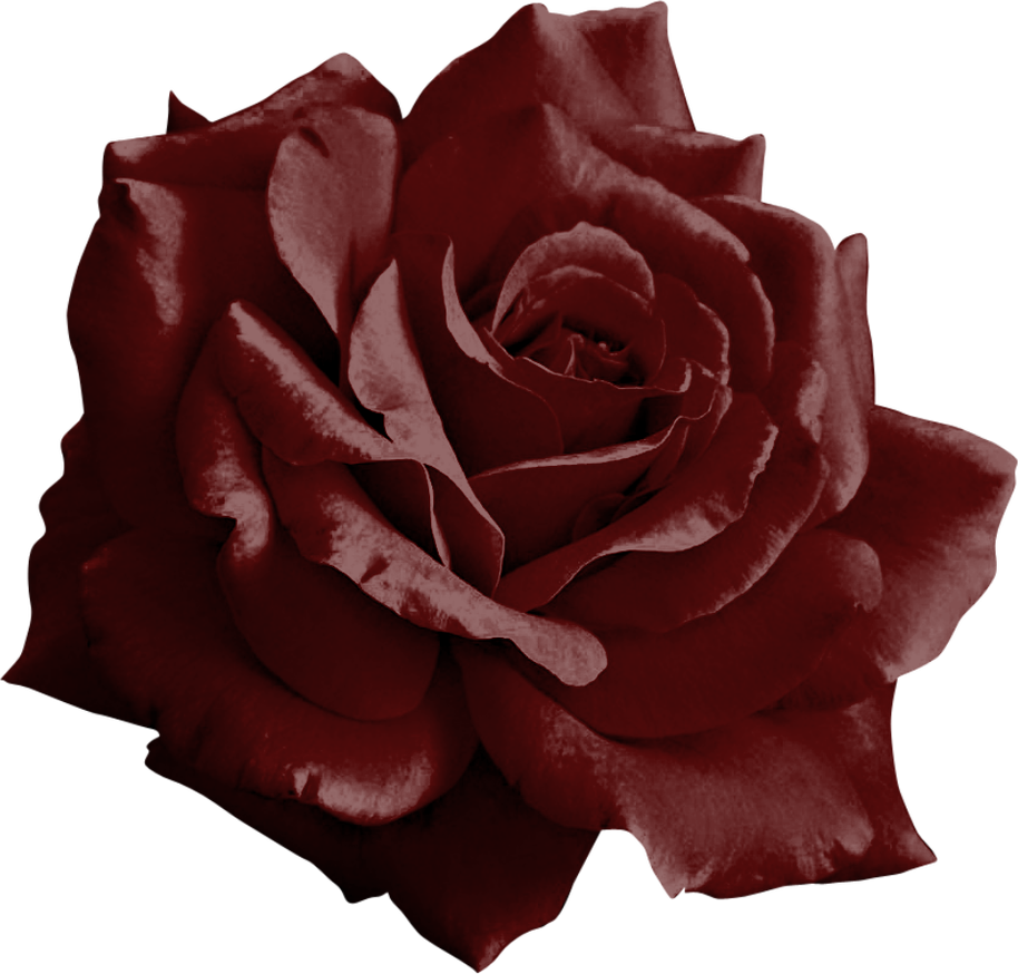 Burgundy flower png. Rose by yotoots on