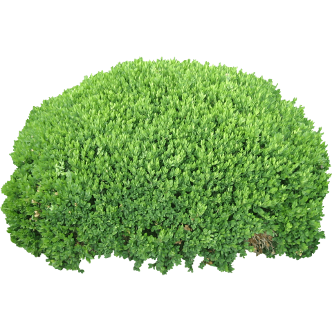 Bush clipart. Download png photo toppng