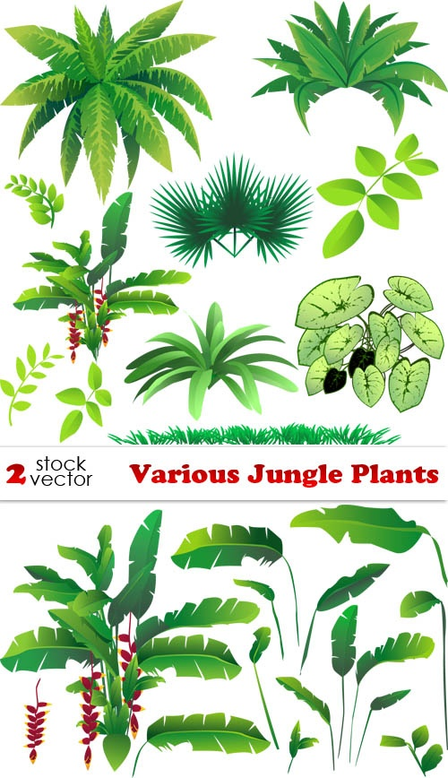 Bush clipart rainforest plant. Drawing easy at getdrawings