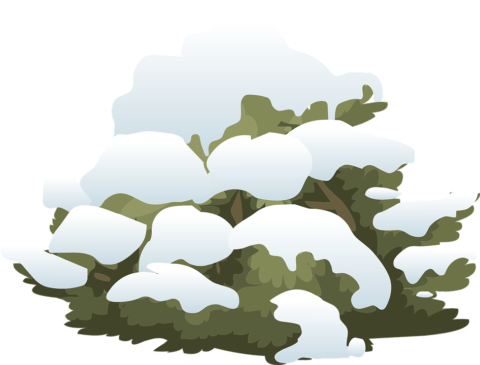 Bush clipart winter. Shrubs clipground shrub snow