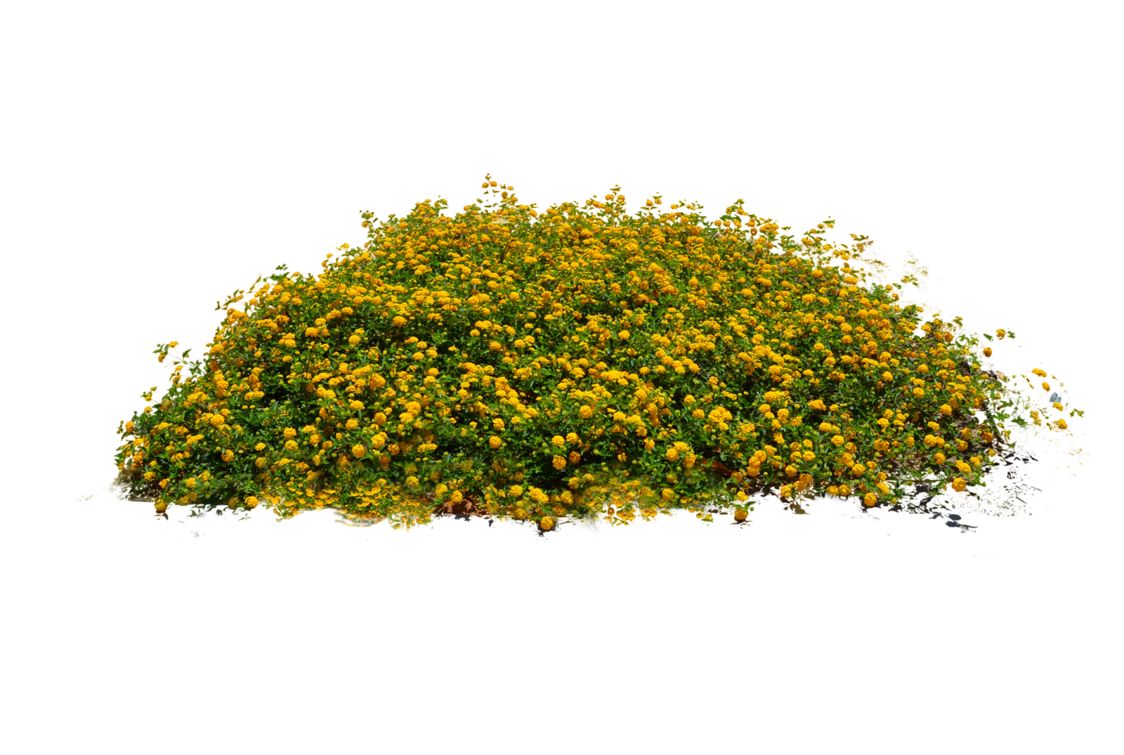 Bush plant png. Plants transparent pictures free