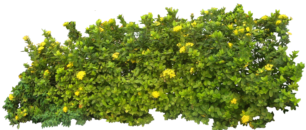 Bush png. Transparent free images only