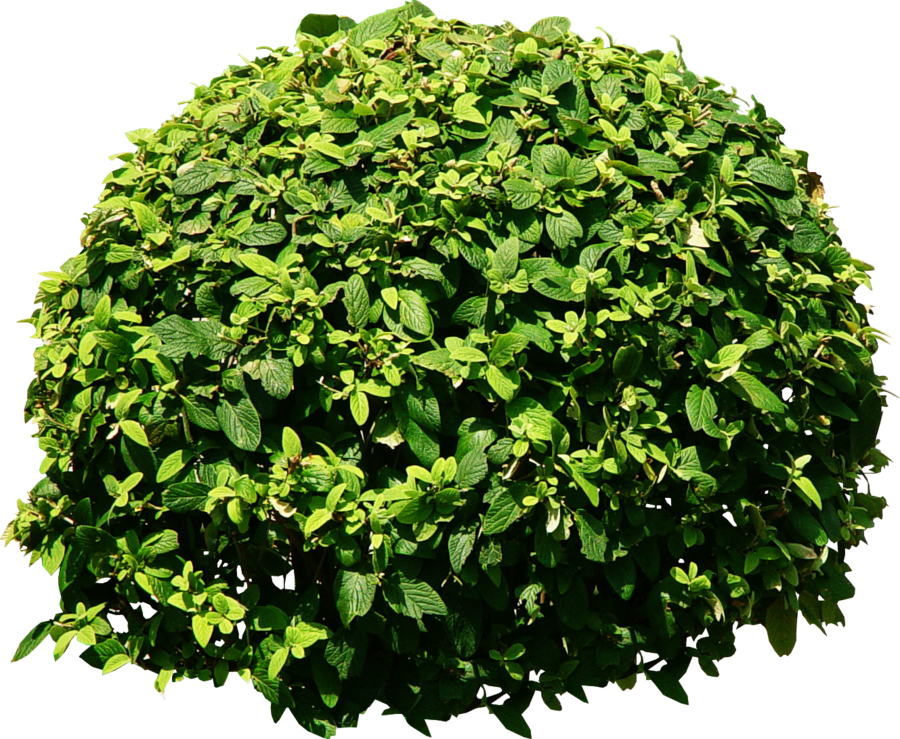 Landscape bushes png. Tree by dbszabo on
