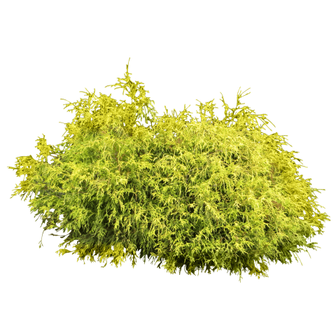Bush top view png. Free images toppng transparent