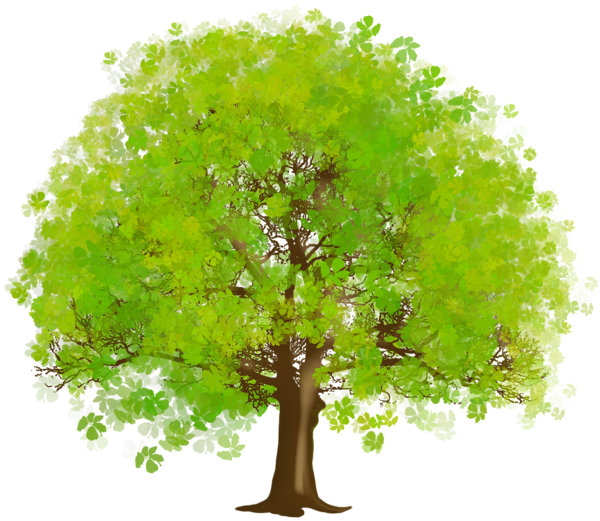 Green trees png. Large tree clipart art